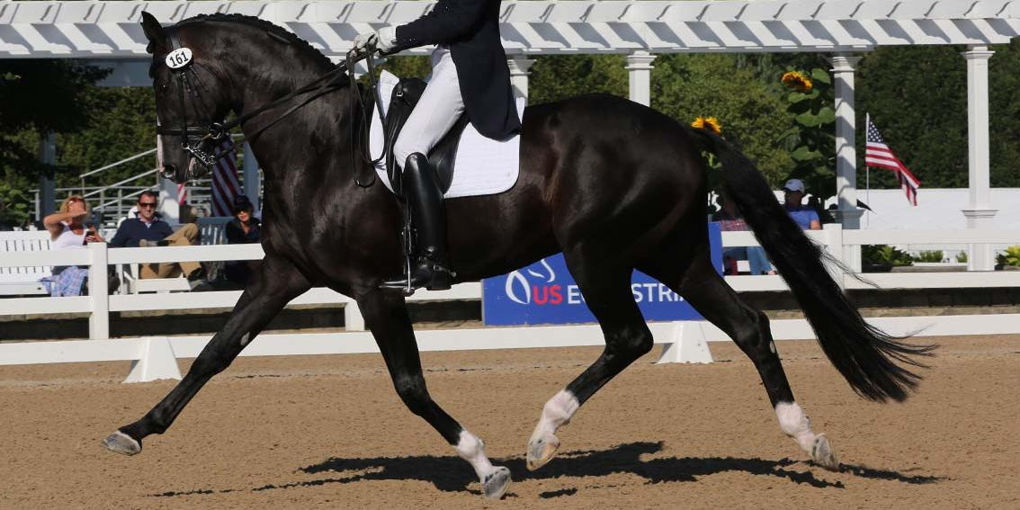 Dressage coach article-Markel Dressage 18-Phelps0099.jpg