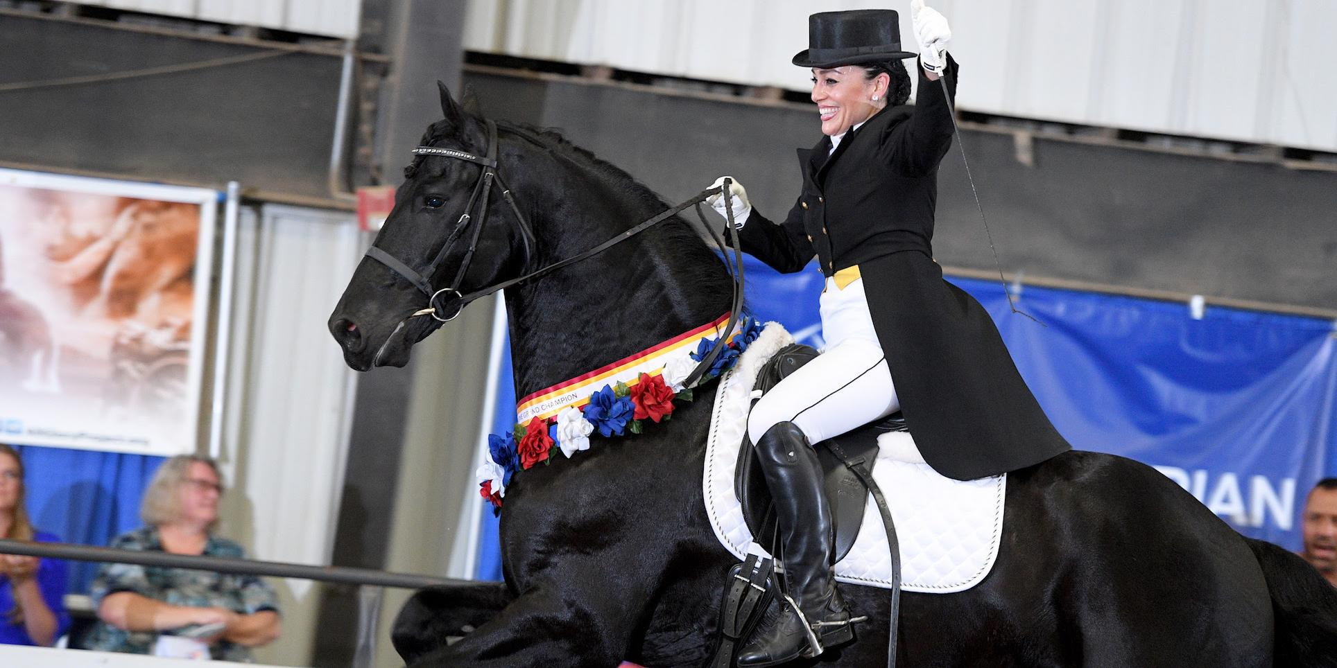 friesian_show_horse_association.jpg