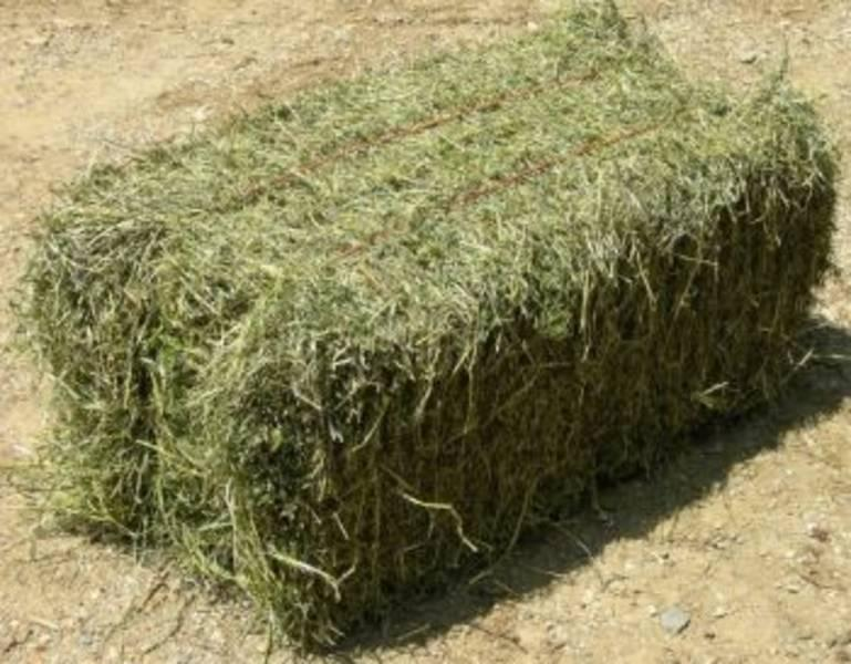Relative Feed Value of Hay and Your