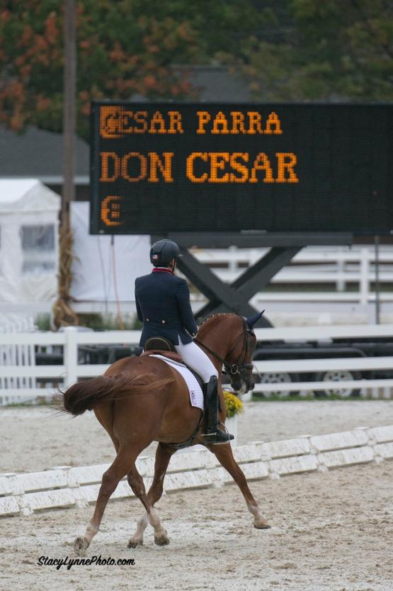 Dr Cesar Parra, Don Cesar, Piaffe Performance, Dressage at Devon