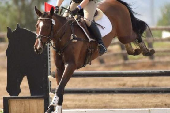 Pavi's Sinfandel and Jamie Lawrence win Champion USEA West Coast Four-year-old Young Event Horse.