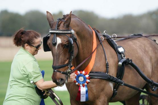 KWPN driving horses like Makari Design (driven by Nifty Hamilton) are now eligible for new KWPN-NA driving awards, presented here by Ellen Ettenger at the 2018 Palm Tree at Little Everglades CDE. Photo by Pics of You.