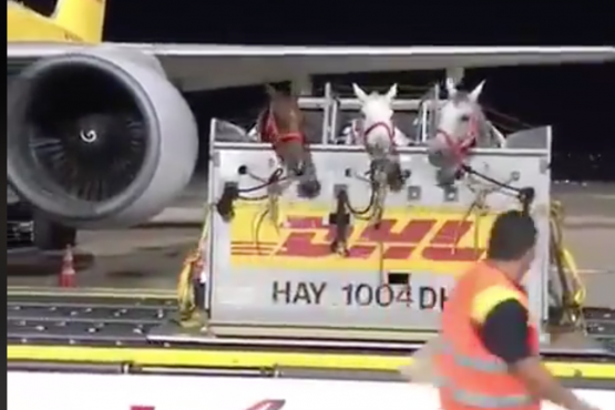 Horses boarding their flight
