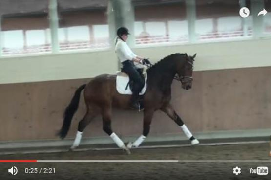 Online opprotunities is one of the many ways to earn credit through USDF University!