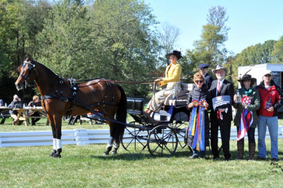 Suzy Stafford and PVF Peace of Mind, the 2015 USEF Single Horse Driving National Champions