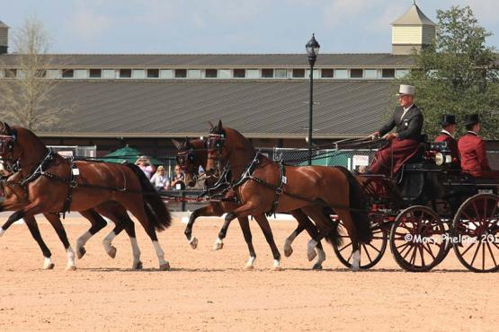 Chester Weber Dressage at the FEI World Equestrian Games Tryon 2018