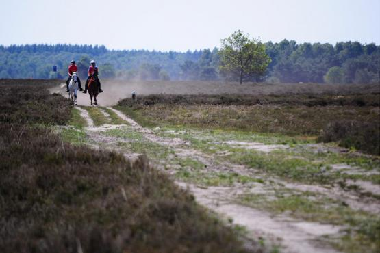 FEI European and World Endurance Championships set for Ermelo