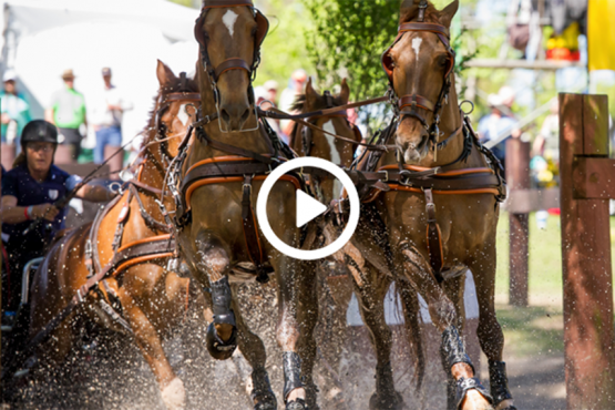 Relive the action of the 2019 Live Oak International on demand on the USEF Network!