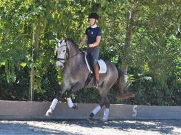 Super Talented young Lusitano For Sale.