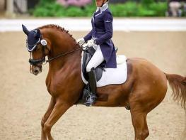 Confirmed Grand Prix Schoolmaster