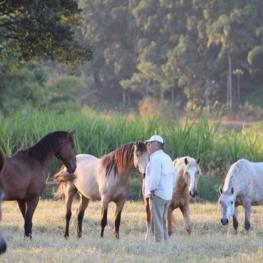 "At Interagro Lusitanos prospective owners can choose from literally hundreds of purebreds while seeing firsthand ""living pedigrees"" represented among the herds"