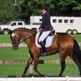 Talented 5 Year old Andalusian Mare