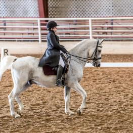 Arlene Gaitan (TX) and her Swedish Warmblood/Arabian, Questt (Photo: Jeanne Shepherd Harford)