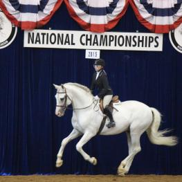 Becky Brok riding her stallion Lucerno G won the Premier Equestrian Sportsmanship Award at the 2015 International Andalusian and Lusitano Horse Association (IALHA) National Championships (Photo courtesy of Becky Brok)