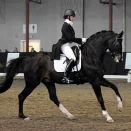 Birkegardens Lukas - 2000 Danish Warmblood Gelding ($75,000 - $100,000)