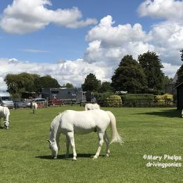 Chardon ponies enjoy last day of their private paddock