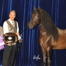 Craig Roberts and Aragon GAF accept the TheraPlate Peak Performance Award at the 2015 International Andalusian and Lusitano Horse Association (IALHA) National Championship Show (Photo: Robert Hess Photography)