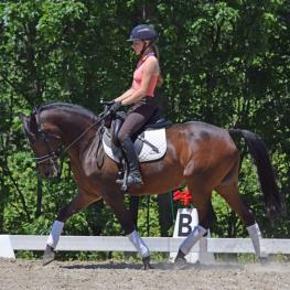 Dipped In Chocolate, German Riding Pony, Gelding