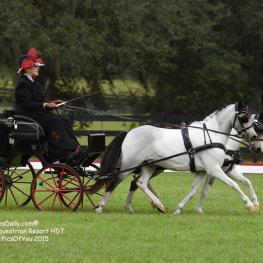 Driving dressage