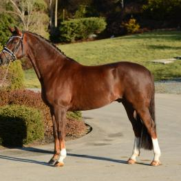 Ducati EE - 2010 Hanoverian Gelding ($30,000 and Under)