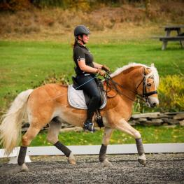 Competitors like Emilie Goddard of Vermont will be traveling from across the country to attend the 2017 National Dressage Pony Cup Championship Show in Lexington, Ky. in July.