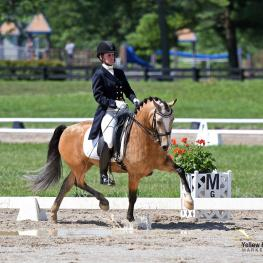 A few puddles weren't going to keep California's Emily Lasher and The Hot Topic of Spring Song from dancing to two titles at the 2017 National Dressage Pony Cup Championship Show.
