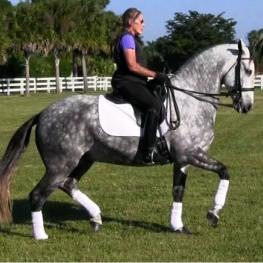 Eragon VO - 2009 Andalusian (and Lusitano) Gelding ($100,000 and