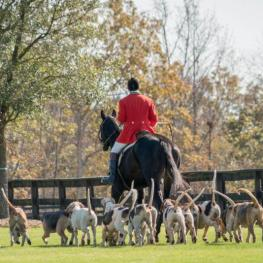 The Festival of the Hunt will take place at TIEC from November 15-19, highlighting the Field Hunter Championships on Friday and Saturday.
