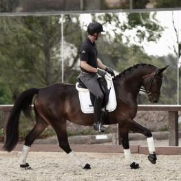 For Finland - 2013 Oldenburg Gelding ($100,000 and Up)