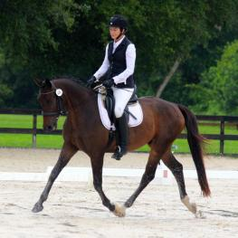 Fortune 500 WHF - 2011 RPSI Gelding ($30,000 and Under)