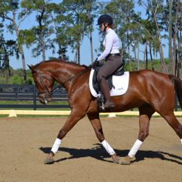 Fritz - 2010 Dutch Warmblood Gelding ($30,000 and Under)