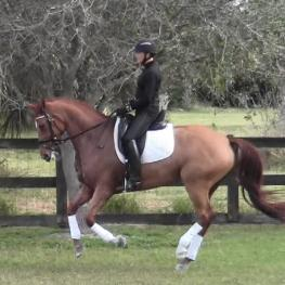 GoldenBria - 2011 KWPN Mare ($100,000 and Up)