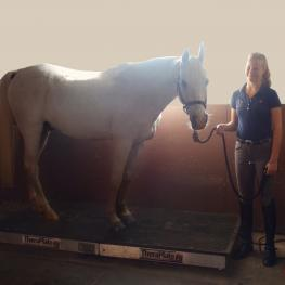 Hannah Irons and Bohdjan love using the TheraPlate at the Dressage4Kids barn