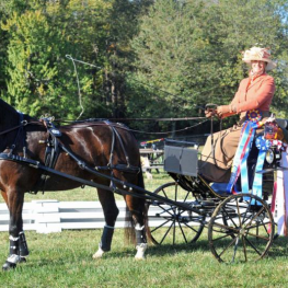 Jennifer Keeler of Paris, KY was one of five USEF Developing Driver Program participants who dominated the Hermitage Classic CDE.