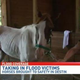 Jodie Kelly Dressage Team taking in flood victims
