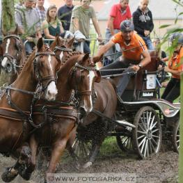 FEI-World-Driving-Championships-Four-In-Hand-2016