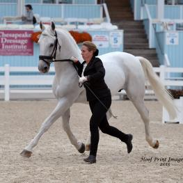 Lippizan, Dressage at Devon 2015, Linda Allen