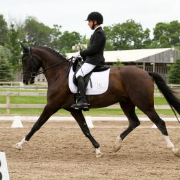 Mike Suchanek and Dublin L, Hannoverian Gelding by Damsey out of EM Wibranda by Wolkenstein II