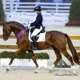 Maplewood Warmbloods, MW Feinermark, Dressage at Devon 2015, Meagan Davis