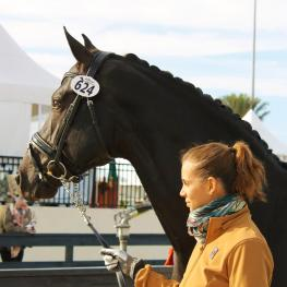 Naima Moreira-Laliberté and her new stallion, Sancerre, preparing for the FEI jog at the Adequan Global Dressage Festival.  This exciting new pair, who achieved promising results throughout the 2016 Florida season -- including the Intermediare 1 Freestyle win at the final AGDF of 2016, with a 72.9% -- is already enjoying great success thanks to coaching by FEI trainer and coach Janine Little, who scouted the new mount for Moreira-Laliberté in Europe just before the start of the season.  (Photo credit: Joann
