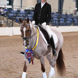 Nancy Foglia and Heavens Lil Dually go home to Dallas as Training Level Amateur division champions at the 2017 National Dressage Pony Cup Championship Show.