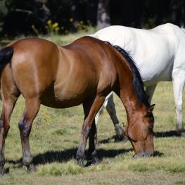 retired racehorses