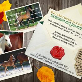 Rheinland Pfalz-Saar International, 3rd Annual Select Online Foal Auction