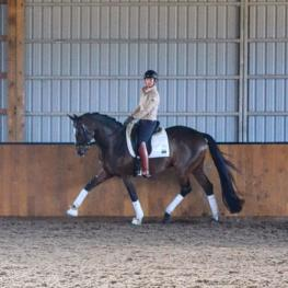 Sieger Boy - 2009 Oldenburg Gelding