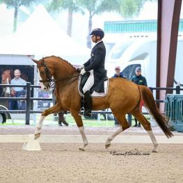 Steffen Peters and Bailarino, Week 7, GDF