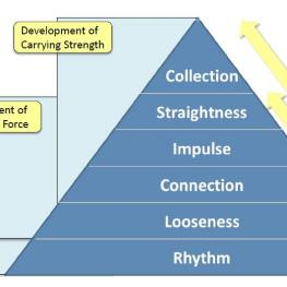 The Training Pyramid, the basis of every horse's education, divided in 3 main phases: Acclimatization, development of propulsive force and development of carrying strength.