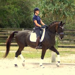 Viggo - 2004 Swedish Warmblood Gelding