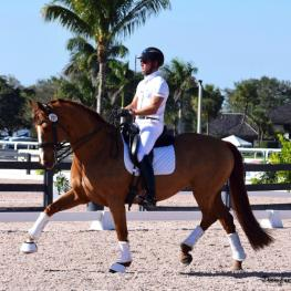 Wortherspoon - 13-year-old KWPN with solid FEI show record.