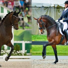 Canadian Dressage Athlete Assistance Program (C-DAAP) recipients Belinda Trussell with Anton (left) and Megan Lane with Caravella (right) will compete for Canada in the Big Tour at the Pan American Games (Left photo: CLiXPhoto.com; Right photo: Rob Madronich)