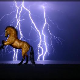 Horse with Lightning in the background